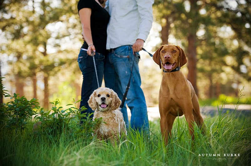 denver colorado engagement session lookout mountain with dogs